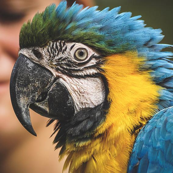A parrot!
